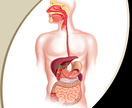 citrus county fl gastroenterology wallis